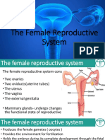 Female Repdn Ppt