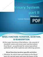 The Urinary System 2.pptx