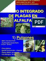 MIP ALFALFA.pdf