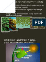 PhotosynthesisA.ppt