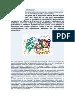 Aminoácidos y proteínas.docx