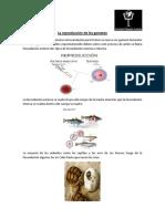 La reproducción de los gametos.docx