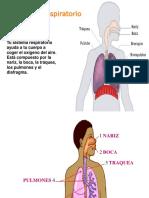 larespiracion LEIDO.ppt