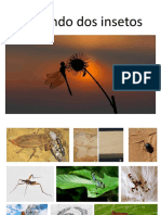 insecta.pdf