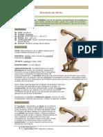 comentario discobolomiron-188.pdf