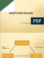 Adaptación Celular.ppt