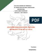 Anatomia y Isiologia Del Aparato Rep. de La Vaca-convertido