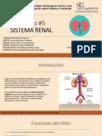 Presentación Sitema Renal .pdf