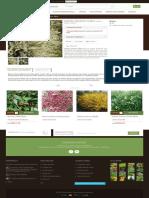 Matura praecox 'Albus' - GardenExpert.ro.pdf