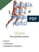 PPT FISIO I