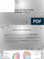 Muscles of the Lower Extremity Vol 2