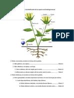 Clave Dendrogramaceae Clau