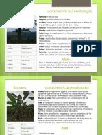 50 cultivos reproductores
