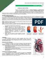 15 - Aparelho Circulatório.pdf