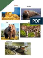 animalescarnivoros-161007171127
