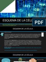 ESQUEMA DE LA CÉLULA.pdf