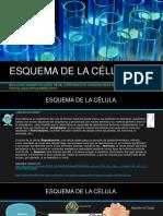 ESQUEMA DE LA CÉLULA.pptx