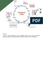 Biosintesis de la leche.docx
