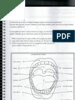 esquema bucal.pdf