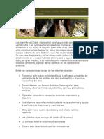 Los mamíferos.docx