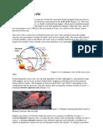 Fundamentals of Plate Tectonics