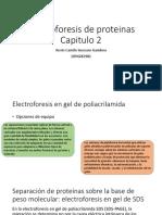 Electroforesis de proteinas.pptx