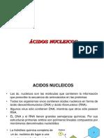 acidos nucleicos ok.ppt