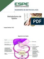 Metabolísmo lípidos