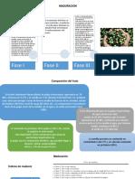 Maduración.pdf