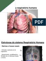 Sistema Respiratório (1).ppt