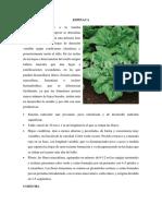 TRABAJO DE POSTCOSECHA.ESPINACA.docx