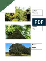 pohon.docx