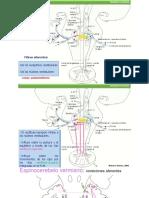 RESUMEN sistemas funcionales-láminas.pdf