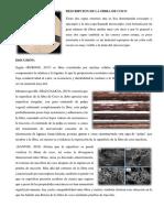 DESCRIPCION DE LA FIBRA DE COCO.docx
