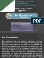 sesion 29 GIMNOESPERMAS Y HELECHOS.pptx