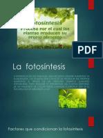 fisiologia vegetal 4 exp.pptx