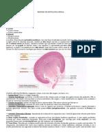Resumo de Histologia Renal (Natália Bonfá) 3.pdf