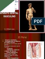 MASCULINO (1).ppt