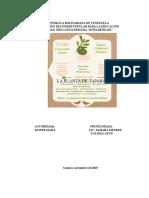 LA PLANTA DE TAPARA.doc