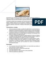 TAREA DE CIMENTACIONES.docx