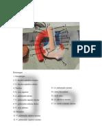 Anatomi Kardiovaskular 4 copy.docx