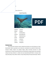 Farhan Danu Fauzan_1813521015_MSP(A)_Klasifikasi Elasmobranchii.docx