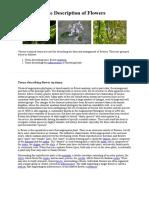Flower description glossary.pdf
