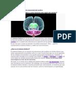 Sistema límbico.pdf