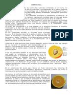 Fruto.pdf