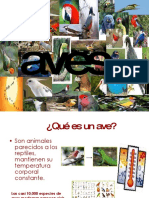 aves-090604122921-phpapp02
