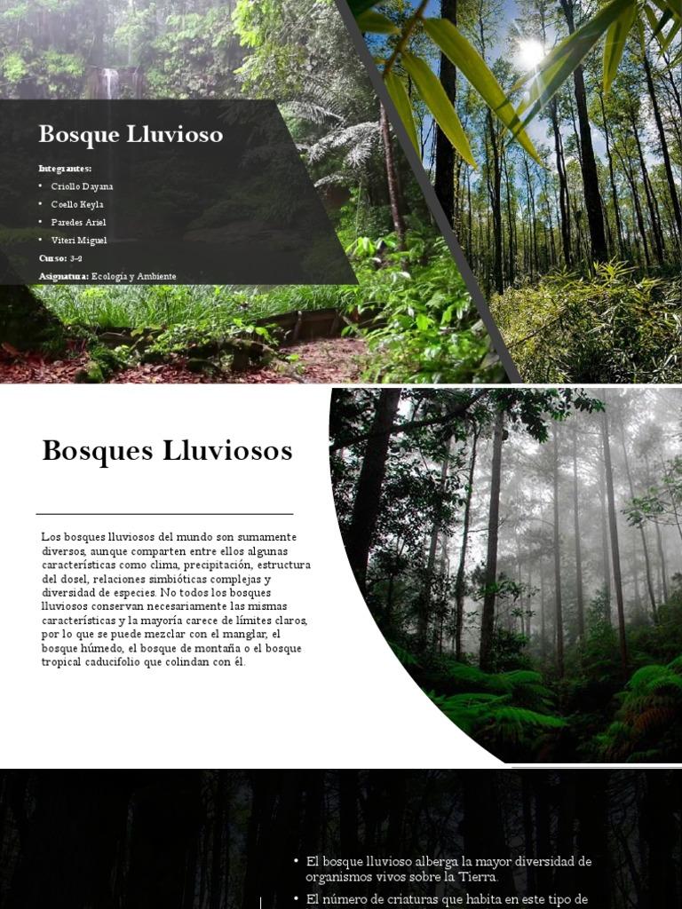 Bosque Lluvioso Zona Tropical Selva