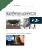 Situación Problemática TBC.pdf