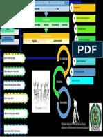 Mapa Conceptual Manual Logistico PONAL
