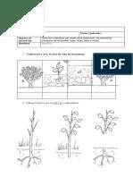 Clasificacion de Las Plantas Primero Basico